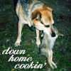 "jesse_the_k: Lucy the ACD holds a freshly dead bunny in her mouth, possesively, captioned ""Down Home Cookin'"" (LUCY rabbit)"