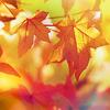 liptonrm: (misc autumn-djalina)