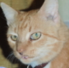 jemyl: My orange male cat, Brudder (Default)