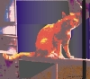 jemyl: pixelated brudder cat on railing (brudderalamondrian)