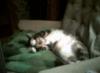 jemyl: Tiffitu relaxes when she sleeps (relaxedtiff)