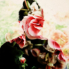therpsecrets: the reflection of a person in the glass before a rosebush (One)