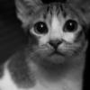allnostalgia: (kitty)