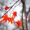 reiu: (autumn)