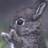 nubianamy: (baby bunny)
