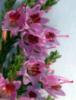 flinchflower: (Heather)