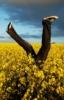 maidenbedlam: (handstand)