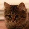 umadoshi: (kittens - Claudia - thoughtful)