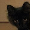 umadoshi: (kittens - Jinksy - top of stairs)