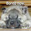bluefall: a very bored and sleepy puppy (bored now)