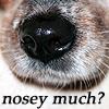 ann_r_starr: (nosey?)
