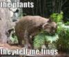 perzephone: (plants)