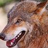von_uberwolf: (Wolf - Good girl!)