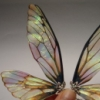 repositorian: (fairy wings)