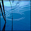 silveraspen: pool of blue water with grass stem and small ripples (still waters of cerulean blue)