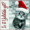 chomiji: A kitten wearing a Santa Claus hat, with the caption, Is it Yuletuide yet? (Yuletide Yet? (Kitten))