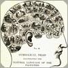 brainwaves: (Phrenology)