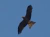 helgi_online: (eagle2)