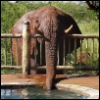 pnathan: elephant bypasses fence to drink from pool (Default)