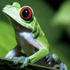 talitha78: (frog by jazzy_peaches)