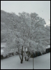 ellarien: photo of snow-covered tree (winter, snow)