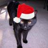 kittenmommy: (Ginny Santa)