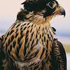 queenlua: (pic#6917339)