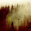 forestofdreamers: (Misty Forest)