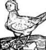 harpijka: (Default)