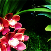 pensnest: red orchid cluster (floral orchid red)