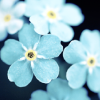 faustaufsaug: (blue flowers)