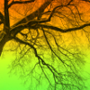 cat_77: old tree w/color (tree)