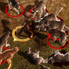 zillah975: Dragon Age hero Alistair surrounded by wolves. (Overwhelmed)