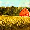 ealgylden: (Autumnal barn)