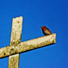 starfleet: A robin perched on a cross (The Vigilante - Not a martyr)