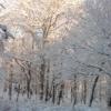 skogsraa: (pic#695109)