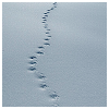 meloukhia: An expanse of snow with a line of footprints wandering through (Snowy footprints)