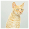meloukhia: An orange tabby cat, peering curiously (Curious cat)