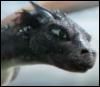kittysdragon: (Lockheed Close Up)