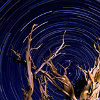 alee_grrl: Photo of bare tree branches against a night sky done taken in a way that makes the stars seem to swirl. (star swirl)