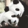 tokkitales: (panda)