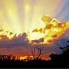 sunshineverse: (Little Tree)