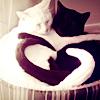 vi: (cat heart)
