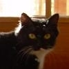 elaineofshalott: My kitty's little face: mostly black but with a white smudge on the left upper lip. (dol)