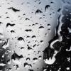 norbic: (rain)