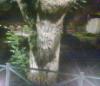 farnam: (devil tree)