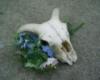 farnam: (skull and flowers)