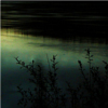 kohikari: shore weeds in shadow against the water's surface, reflecting the sky (reedy shore)