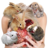 cowgirl65: five rabbits sit on a person's head gnawing on their exposed brain (Default)