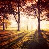 helenorvana: (Stock - sun through the trees)